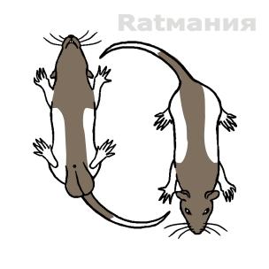 DownUnder/Зеркальный